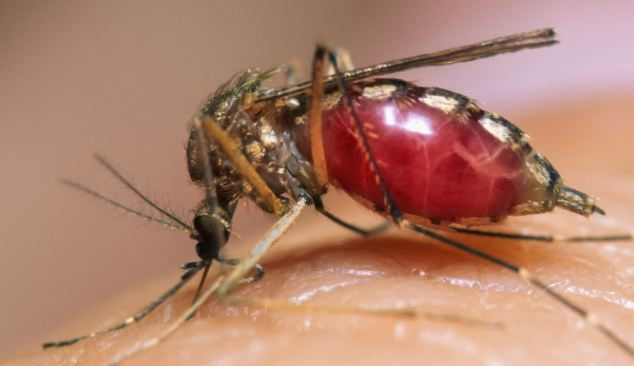 West Nile virus was first detected in New Hampshire this season